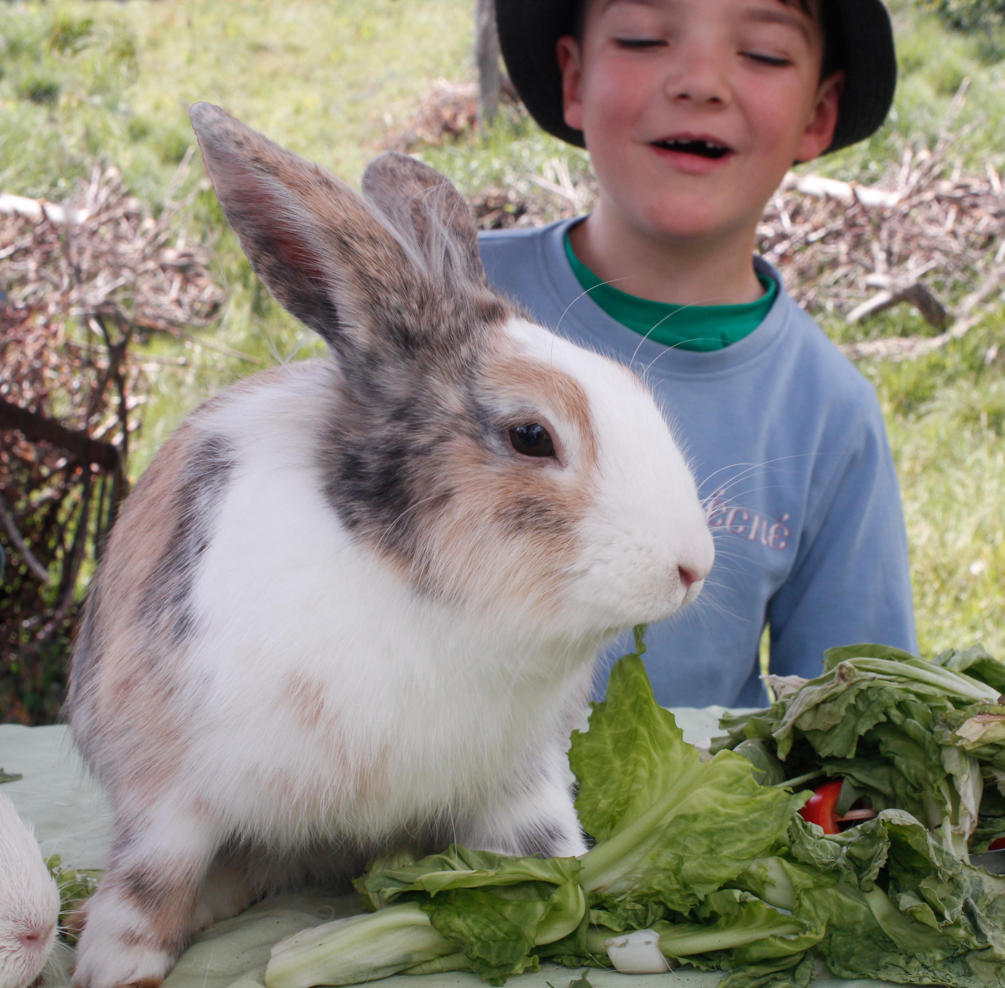 Activités avec et autour des animaux pour les enfants